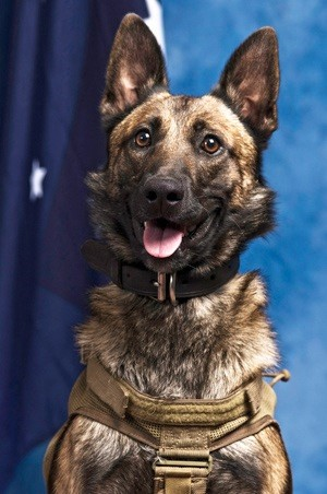 Combat Assault Dog DEVIL