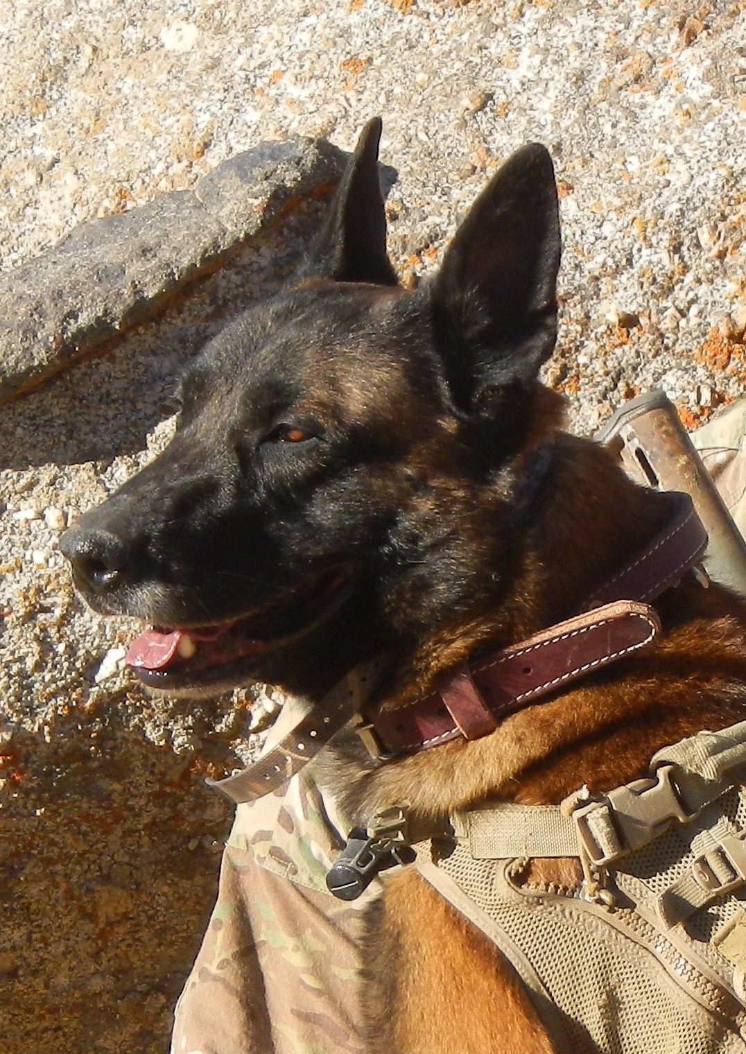 Combat Assault Dog FAX
